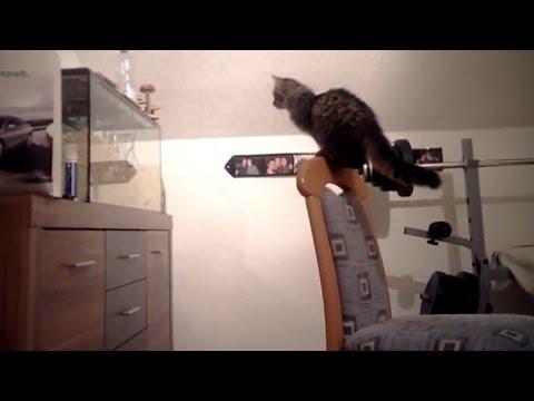 Cats VS Aquariums (HD) [Funny Pets]