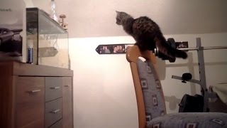 Cats VS Aquariums (HD) [Funny Pets]