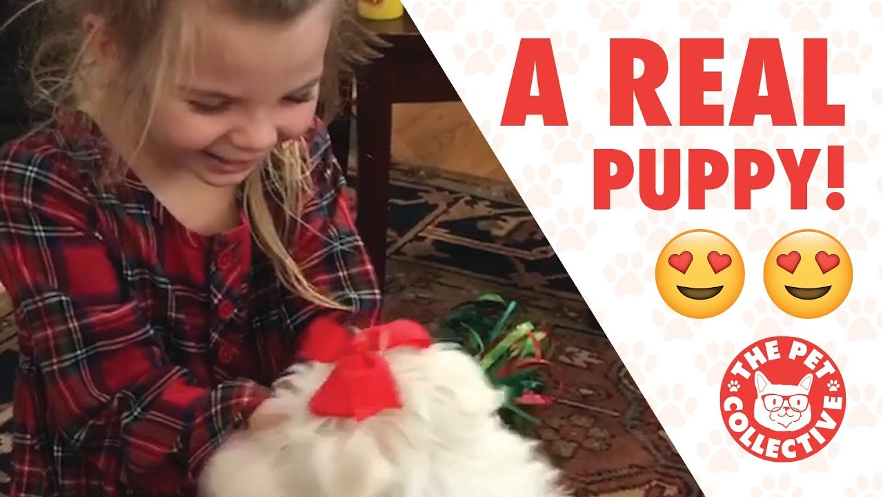 Best Gift Ever | People Getting Surprised With Puppies - YouTube