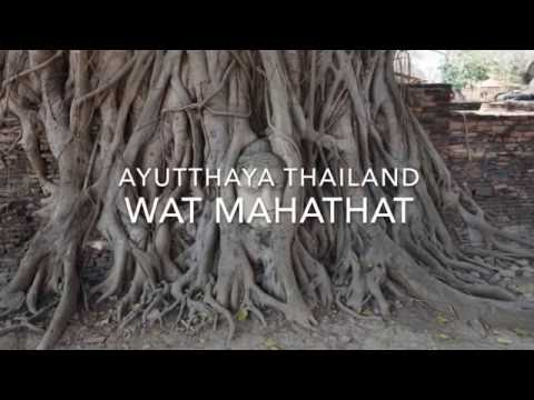 Wat Mahathat Ayutthaya Thailand - The Buddha Head in the Tree