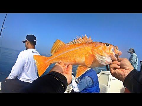 Fishing For Rockfish | Half Moon Bay