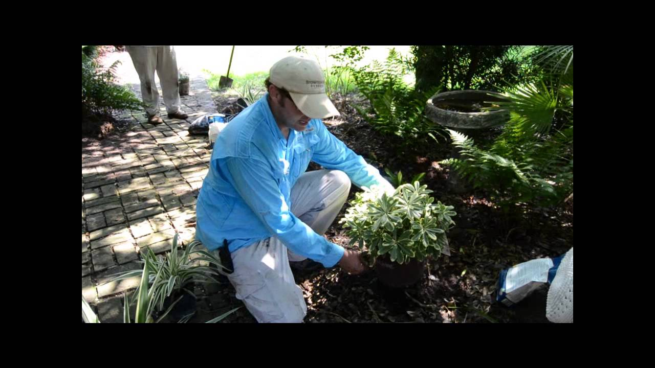 Brownswood Nursery How To Plant