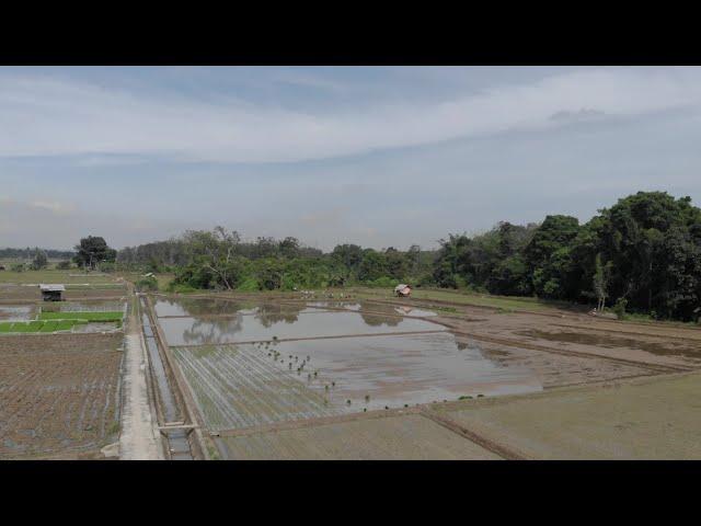 Habar Tani - Irigasi Mantap, Produksi Padi Meningkat