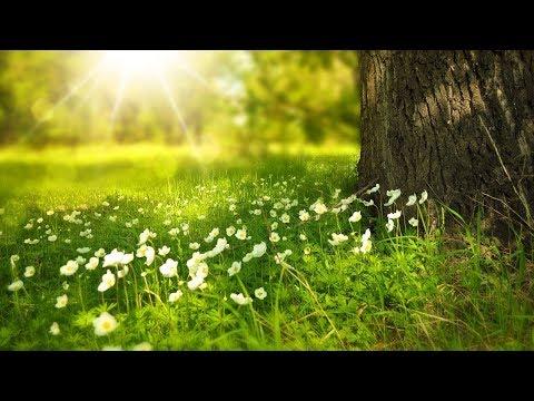 Sonidos de la Naturaleza y Música Relajante - Música de Relajación y Sonidos Relajantes para Dormir