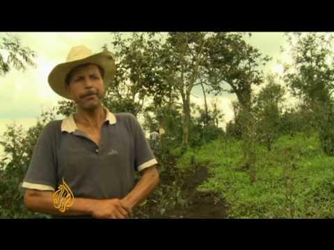 Ash still covers Guatemalan coffee farms