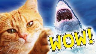 KAT FANGER GIGA FISK?! #5 - Dansk: Cat Goes Fishing