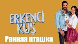 Ранняя пташка / Erkenci Kus 46, 47, 48, 49, 50 серия / турецкий сериал / на русском / анонс, сюжет