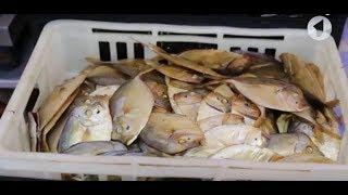 Тонкости рыбного производства / Доброе утро, Приднестровье!