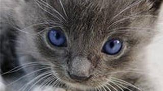 Котята идут на войну !