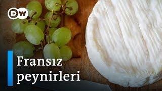 Fransa'da peynir savaşları - DW Türkçe