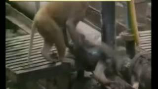 जानवर के साथ सेक्स