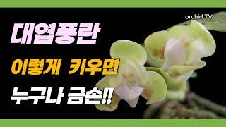 나도풍란( 대엽풍란) 키우는 법과 여러가지 꽃과 여러가…