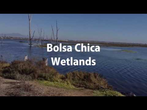 Hiking Bolsa Chica Wetlands - Orange County, California