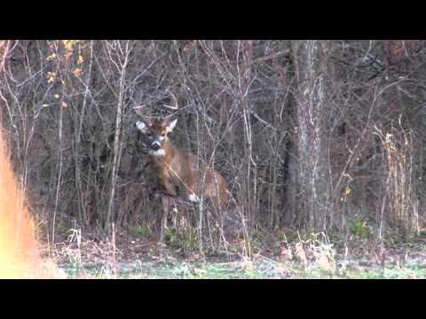 Cabela's Whitetail Season: Ground Blind Attack | Cabela's Deer Nation