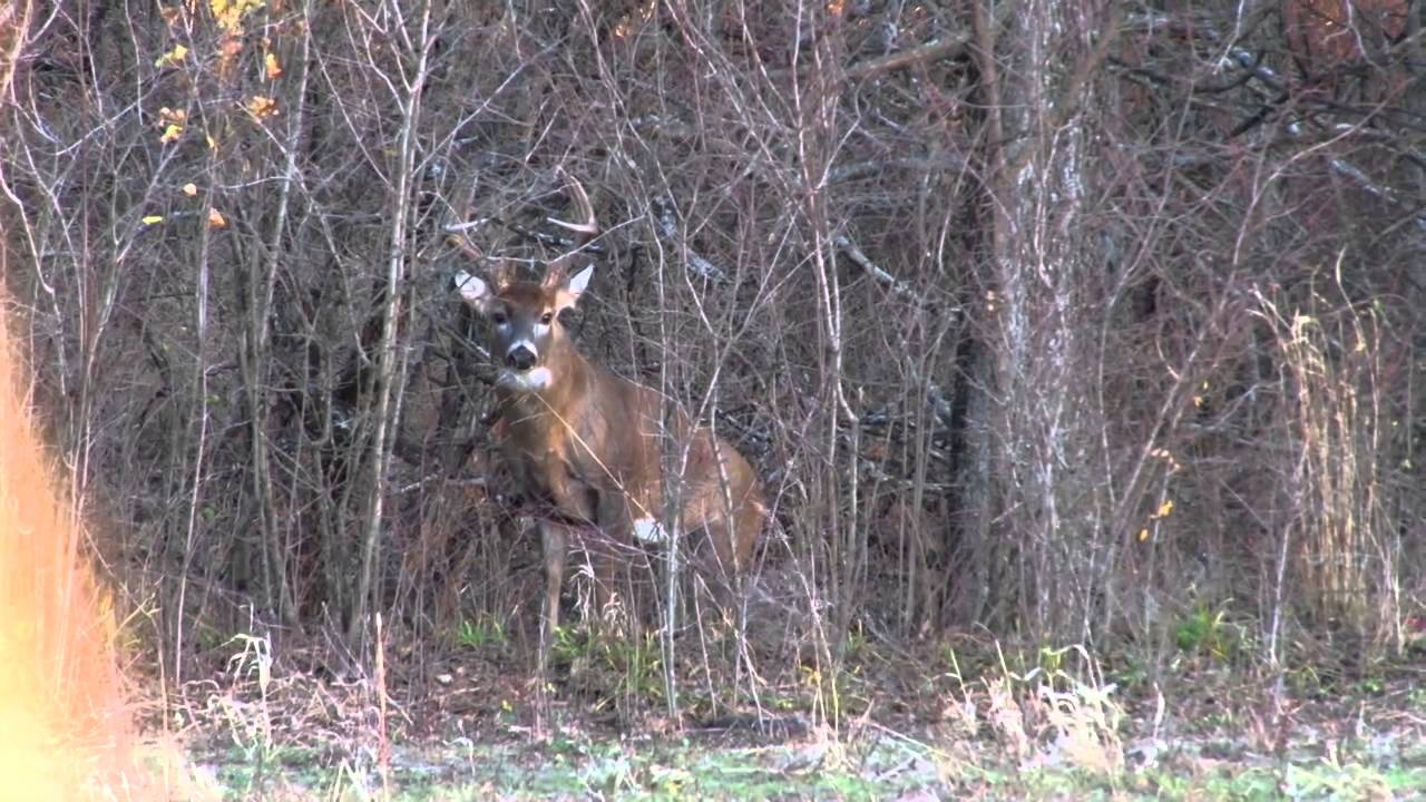 deer ideas to build building a minutes how net curtain ground source blind ordinary camo x in youtube hunting alfouzan blinds