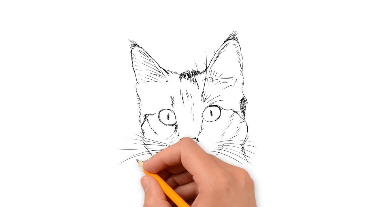 Drawing Cartoon Cat Face Tutorial How To Easily Drawing Cats Step