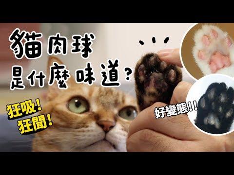 【黃阿瑪的後宮生活】貓肉球是什麼味道?