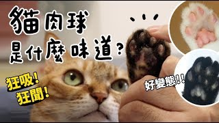 黃阿瑪的後宮生活-貓肉球是什麼味道