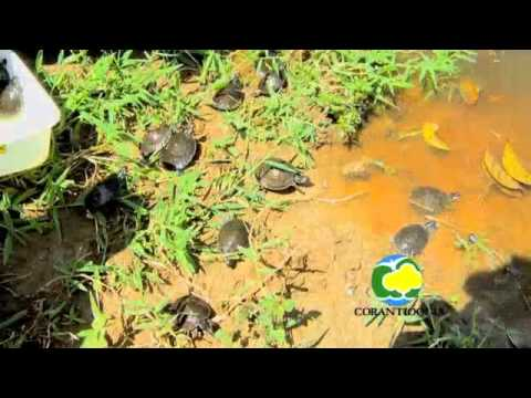 Conservación de Tortugas
