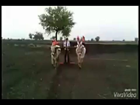 Annigeri ಬಸವ ಜಯಂತಿ ಸಾ ಜಾಡಗೇರಿ