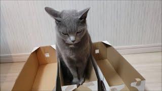 5歳児にビビって固まる灰色猫 (しゃっくりソング入り)