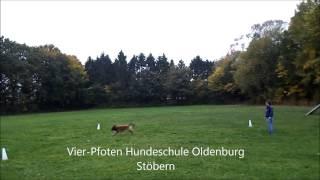 Stöbern In Der Vier Pfoten Hundeschule, © Stefan Schnick 2012