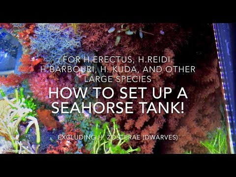 How to set up a seahorse tank - extended version!