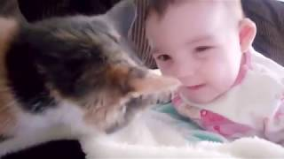 Baby and Cat Fun and Fails   Funny Baby Video480p