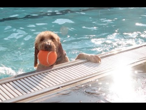 Doggy Pool Party: Unleashed and swimming free, pooches take over JCC's pool