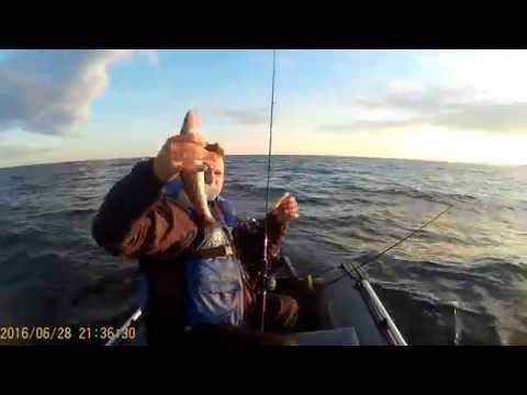 ловля судака в заливе на джиг