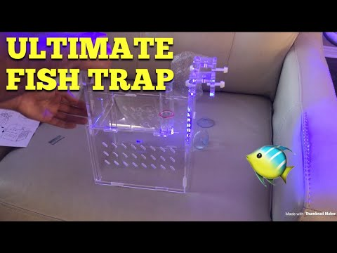 Ultimate Fish Trap 🤙🏼