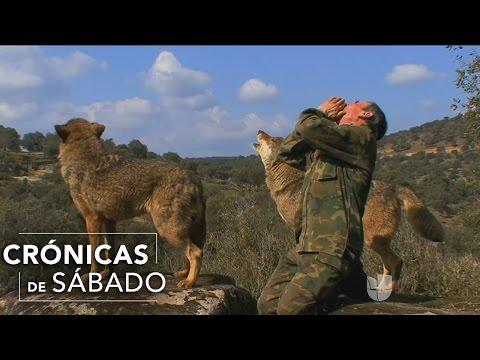 El reencuentro de un hombre con sus hermanos, los lobos de la Sierra Morena