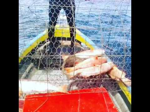 Deep Sea Fish Traps 七星班