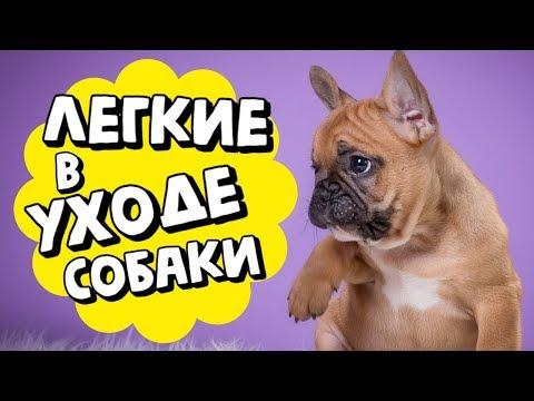 Вопрос: Какую породу собаки выбрать?