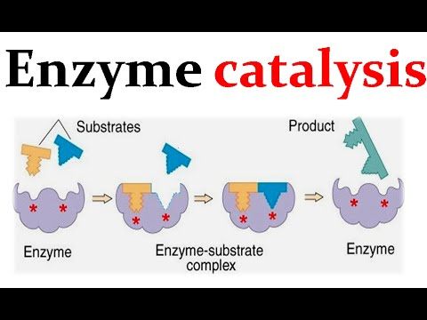 Enzyme catalysis mechanism