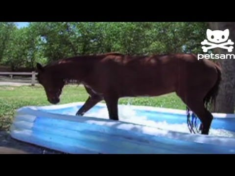 Pferd im Kinderpool