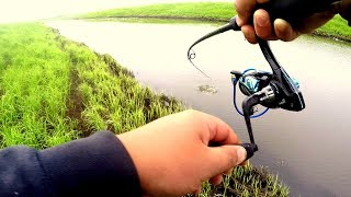 ДА сколько здесь РЫБЫ в этом РУЧЬЕ Рыбалка на спиннинг Ловля Щуки