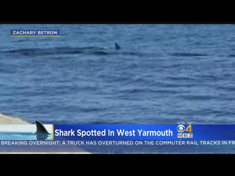 Shark Spotted In West Yarmouth