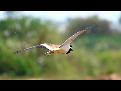 Canon 700D + 55-250mm lens Bird's Flying Photography Wildlife