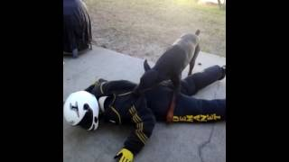 Personal Protection Dog Training Tampa Bay