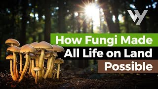 How Fungi Made All Life on Lan…