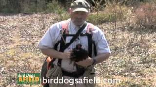 Bird Planting Tips