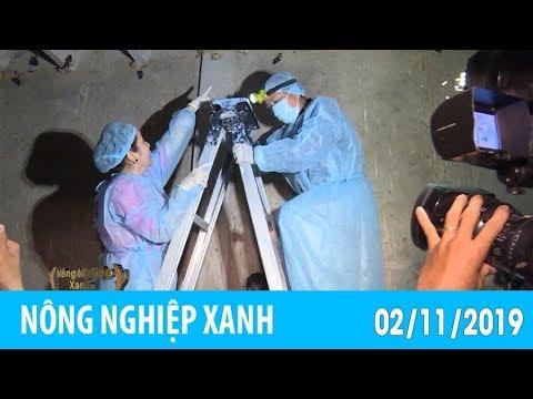 Nuôi chim yến công nghệ 4.0 | NÔNG NGHIỆP XANH – 02/11/2019
