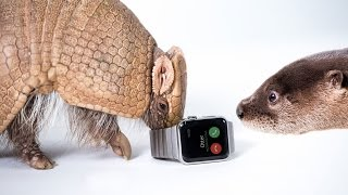 Zoo Animals Review the Apple Watch
