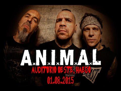 A.N.I.M.A.L. - Auditorio Oeste, Haedo, Argentina 01/08/2015 (Cobertura)