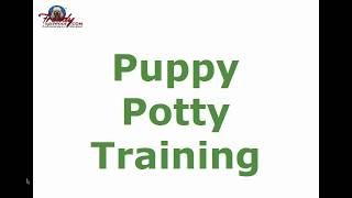 Puppy Potty Training | Top Tips