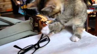 Котенок 3  (шаловливый )