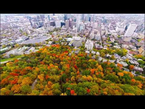 Aerial view Mount Royal Park (Mont-Royal) - Montreal (Quebec) - Canada (by drone) at Fall