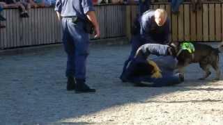 スイス OLMA( 東スイスの農業、酪農産業展)で行われた Polizeihunde i...