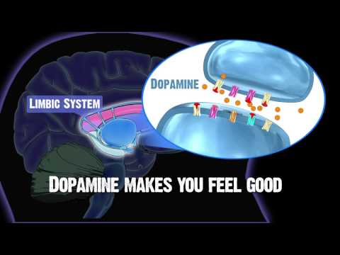Drug and Alcohol Abuse and The Brain: Limbic System